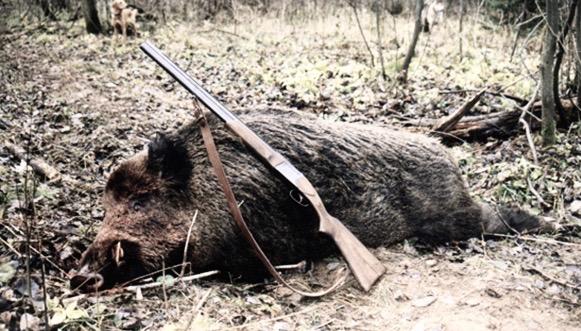 hog-hunting-3 (1).jpg